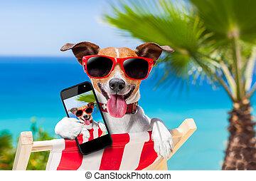 pes, selfie, léto