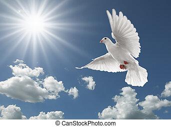 Pigeon na obloze