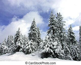pinie kopyto, sněžit