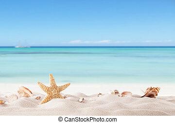 Plážní pláž s korýši a skořápky