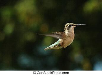 Pobavný pták
