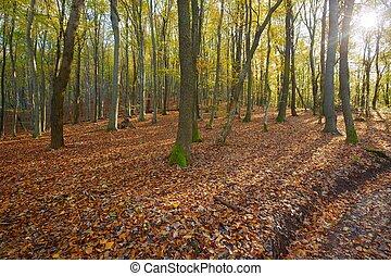 podzim, štěstí, les
