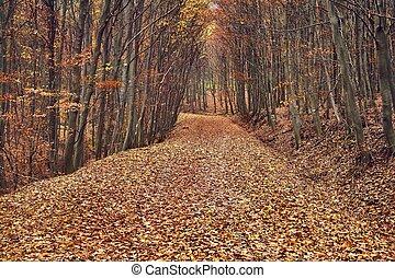 podzim, cesta, les