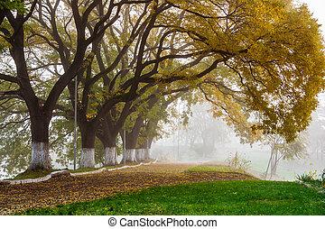 podzim, mlha, kopyto