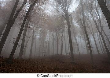 podzim, mlha, les, kopyto