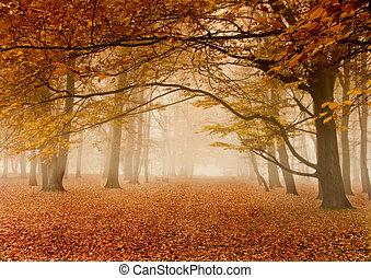 podzim, mlhavý
