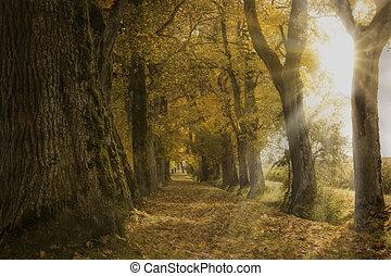 podzim, německo, list, oak pěšina