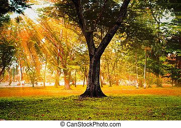 podzim, sluneční paprsky, forest.