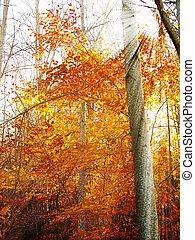 podzim, sluneční paprsky, les