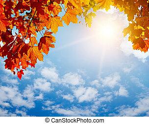 podzim, slunit se, list, paprsek, zbabělý