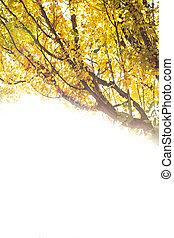 podzim zapomenout, strom