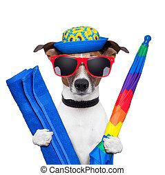 prázdniny, pes, léto