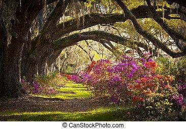 pramen, španělský, dub, kopyto, osada, jasný, azalka, mech, kvetoucí, sc, charlestone, květiny, pel