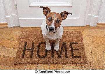 Psí přivítání doma