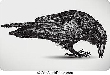 ptáček, illustration., vektor, čerň, hand-drawing., hltat