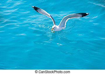 Ptačí rack na mořské vodě v oceánu