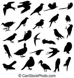 Ptačí siluety