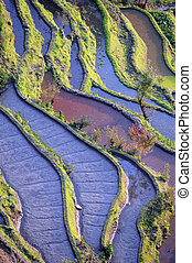 Rýžové terasy yuanyang v yunnanu, porce