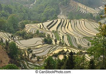 Rýžové terasy Yuanyangu