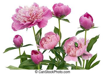 Růžová kuželka a zelená štěnice
