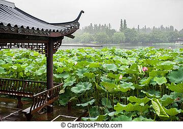 Růžový lotosový květ na jezeře