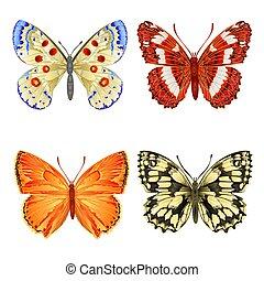 Různé motýly