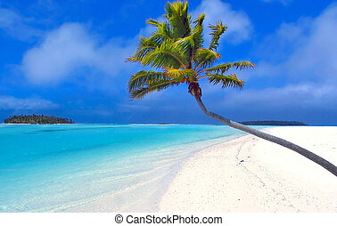 Rajská palma