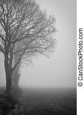 Ranní monochromový pohled na toto pole s stromy