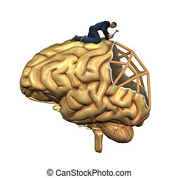 Rekonstrukce mozku