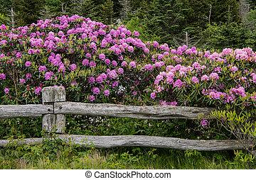 Rhododendronův plot