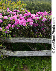 Rhododendron a zábradlí