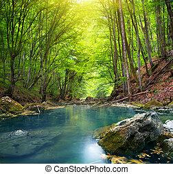 River v horském lese.