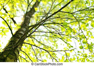 Roční větev