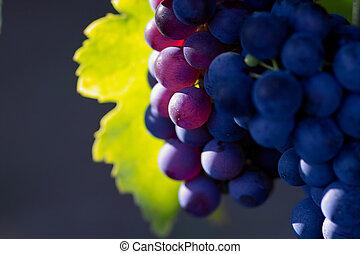 Ruční tmavé víno