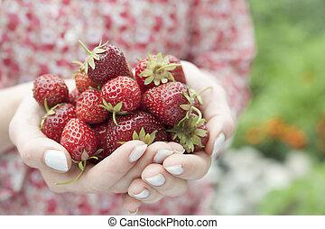 Ruce drží čerstvé jahody