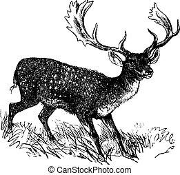 rytina, vinobraní, jelen, ležící ladem, dama, dama, nebo