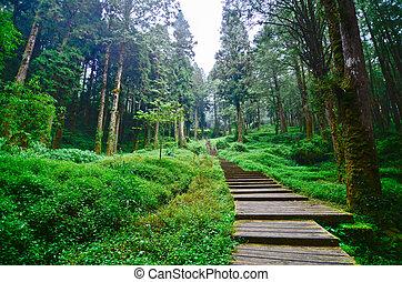sad, kratochvíle, taiwan, alishan, les