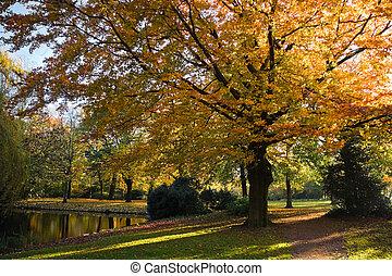 sad, zlatý, podzim, strom, buk