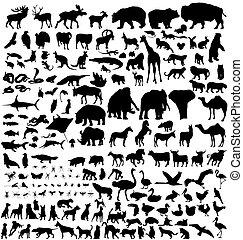 Sbírka zvířat