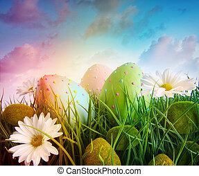 sedmikráska, vejce, duha, nebe, barva, pastvina, velký