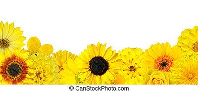 Sekce žlutých květů na dně je izolovaná