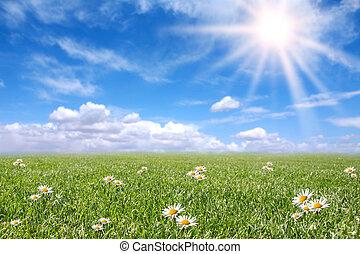 Serene sunny field meadow na jaře