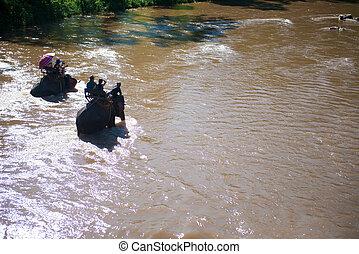 severní, slon, skrz, džungle, trekking, thajsko