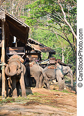 severní, tábor, asie, slon, thajsko, vilage