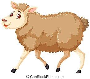 sheep, běloba grafické pozadí
