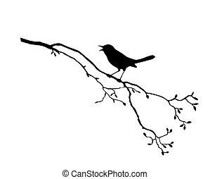 Silhouette, ptáček na větvi