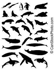 silhouettes, vektor, mammals., moře, ilustrace