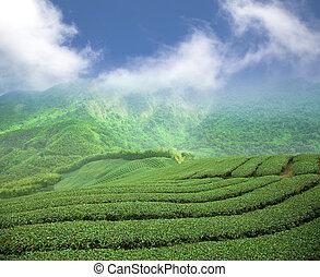 silný, hromada čeho údolí, osada, čaj