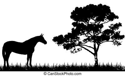 silueta, kůň, strom