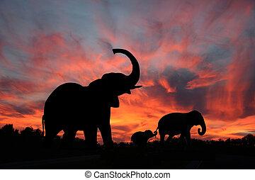 silueta, západ slunce, slon